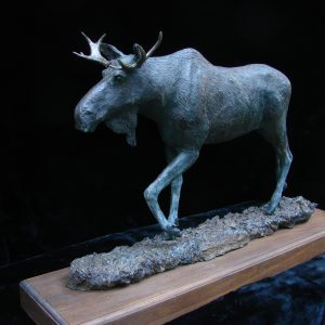 """Bull Moose II"" - by James Gartin 24"" x 6.5"" x 15"" H - L/E 30 - Bronze"