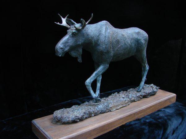 """Bull Moose II"" - by James Gartin 24"" x 6.5"" x 15"" H - L/E 30 - Bronze"