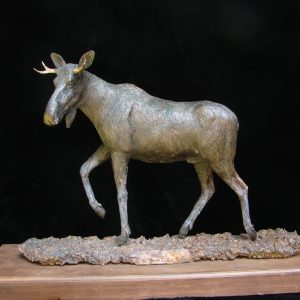 """Bull Moose III"" by James Gartin 24"" x 6.5"" x 15""H L/E 30 - Bronze"