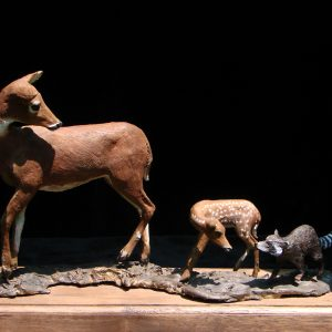 """New Friend"" Whitetail Bronze Sculpture by Jim Gartin 10"" x 5"" x 10""H - L/E- 30 - Bronze"